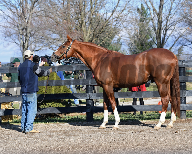 Charismatic at Old Friends on Dec. 12, 2016, near Georgetown, Ky.