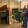 Caption: British Idiom on the vibrating plate. Heath checks on afternoon therapies, walking the whole training complex. <br /> A native of Oklahoma, Heath started working at WinStar Farm on October 10, 2014, and became the farm trainer in October of 2018. Presently he has about 100 horses in training at the WinStar Farm training center, where they have a 7 1/2-furlong main track and 3/4 of a mile undulating turf gallop.<br /> Daily Life series on Destin Heath, farm trainer at WinStar Farm on Aug. 11, 2020 WinStar Farm in Versailles, KY.