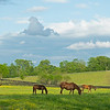 Caption: (L-R): Sweet Diva and her Free Drop Billy filly, Mayhaw and her Midnight Lute filly, and Croon and her Cross Traffic filly<br /> Mares and foals on Heaven Trees Farm near Lexington, Ky., on May 22, 2020 Heaven Trees in Lexington, KY.