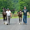 Caption: (L-R): Hollywood Story held by Sergio Munoz with her 2020 Tapit filly. held by Connor Burton.<br /> Hollywood Story at Starwood Farm near Versailles, Ky., on June 30, 2020 Starwood Farm in Versailles, KY.