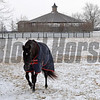 Stallion More Than Ready at WinStar Farm in Versailles, Ky. on Jan. 13, 2018.