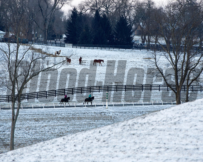 Training at WinStar Farm near Versailles, Ky., on Jan. 7, 2017. Other horses look on.