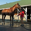 Attachment Rate - Morning - Churchill Downs - 083020. Photo: Anne M. Eberhardt