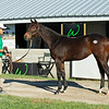 Hip 279 Happy Charger (filly by Super Saver from Happy Week) from Woodford Thoroughbreds<br /> Sales horses at the Keeneland November Sale at Keeneland in Lexington, Ky. on November 9, 2020.