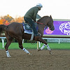 Mr. Freeze<br /> Breeders' Cup horses at Keeneland in Lexington, Ky. on November 4, 2020.