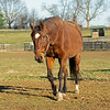 Patch<br /> Old Friends near Georgetown, Ky., on Dec. 11, 2020.