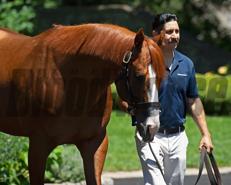 Justify.<br /> Stallions Uncle Mo, Justify, and American Pharaoh at Ashford Stud on June 23, 2021.