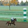 Tiz the Law with Heather Smullen prepares to work. <br /> Breeders' Cup horses at Keeneland in Lexington, Ky. on October 31, 2020.