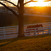 horse walking. back to barn at sunset<br /> Keeneland January Sales at Keeneland near Lexington, Ky., on Jan. 14, 2021.