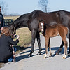 Claire Crosby gets up close for video of the mare and foal. <br /> Flawless with her 2021 colt, a full brother to Authentic, born on Feb. 7 at Hurricane Place farm near Cynthiana, Ky., on March 3, 2021.