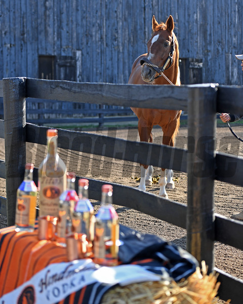 Charismatic at Old Friends on Dec. 12, 2016, near Georgetown, Ky. with Tito's Vodka, an Old Friends Sponsor