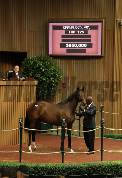 Hip 125 filly by A.P. Indy from Miraculous Miss consigned by Eaton Sales--NOT SURE if $650,000 is final price.