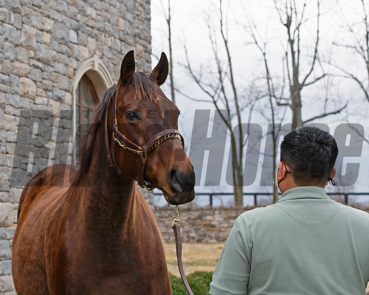 with handler Osvin Figueroa<br /> Bubbler owned by Clearsky and Hill 'n' Dale is at a division of the Cleary family's Clearsky Farm near Midway, Ky. on March 11, 2021.