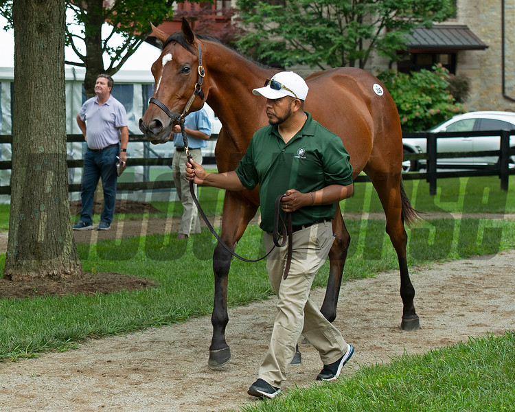 Hip 325 colt by Always Dreaming out of Waltzing Matilda at Vinery Sales, agent. <br /> Scenes, people and horses at The July Sale at Fasig-Tipton near Lexington, Ky. on July 10, 2021.