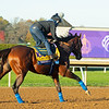 Maximum Security<br /> Breeders' Cup horses at Keeneland in Lexington, Ky. on November 4, 2020.