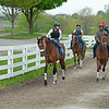 Caption: Brad Cox strong with Owendale, front left, heads to the track, with Vault, right (Shaun Bridgmohan in red cap), <br /> Keeneland scenes and horses on April 25, 2020 Keeneland in Lexington, KY.