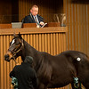 Hip 645 Gold Souk from Bedouin Bloodstock<br /> Sales horses at the Keeneland November Sale at Keeneland in Lexington, Ky. on November 11, 2020.