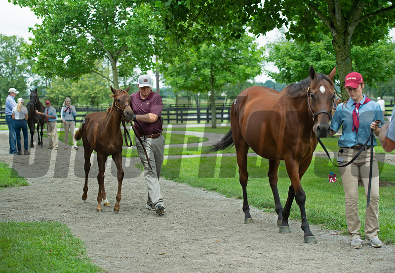 Hip 445 Im Classic Quality with her Mshawish foal at Taylor Made<br /> Scenes, people and horses at The July Sale at Fasig-Tipton near Lexington, Ky. on July 11, 2021.