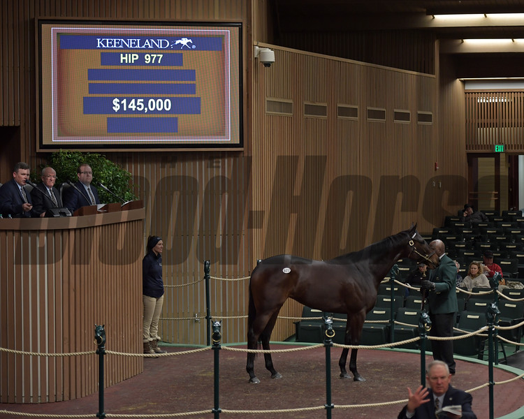 Hip 977 Runway Doll from Elite brings $145,000 from Coolmore.