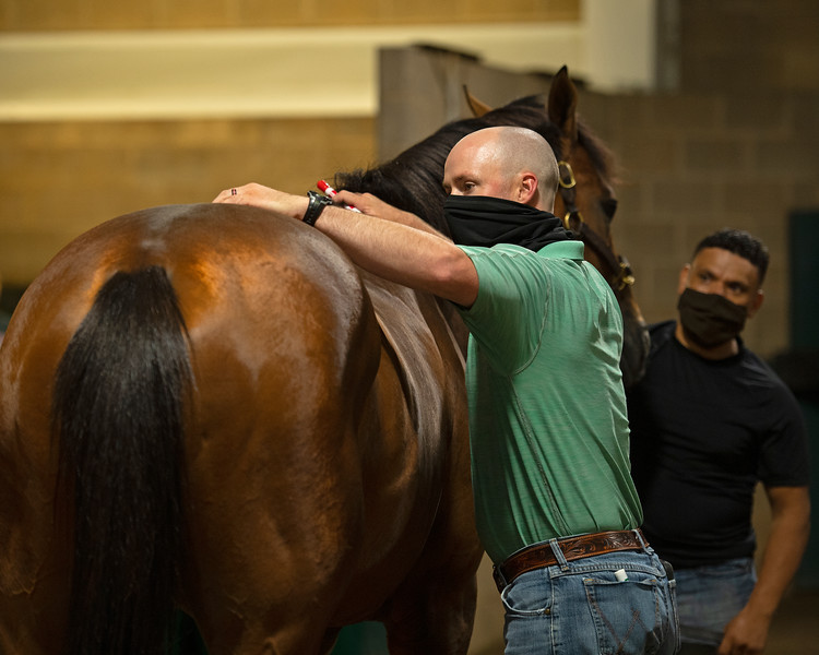 Caption: With color coded markers in hand from changing up set lists, Destin takes a break to check out one of his charges.<br /> A native of Oklahoma, Heath started working at WinStar Farm on October 10, 2014, and became the farm trainer in October of 2018. Presently he has about 100 horses in training at the WinStar Farm training center, where they have a 7 1/2-furlong main track and 3/4 of a mile undulating turf gallop.<br /> Daily Life series on Destin Heath, farm trainer at WinStar Farm on Aug. 11, 2020 WinStar Farm in Versailles, KY.