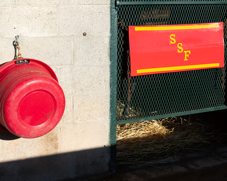 Sam-Son Farm consignment<br /> at the Keeneland September Sale.