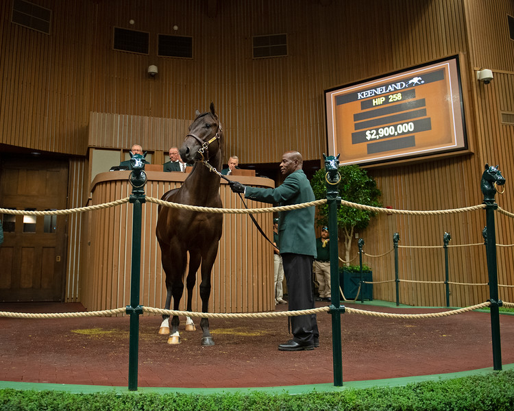 The War Front colt consigned as Hip 258 in the ring at the Keeneland September Sale