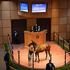 Hip 445 colt by Unclo Mo out of Walk Close from James Herbener<br /> Fasig-Tipton Selected Yearlings Showcase in Lexington, KY on September 10, 2020.
