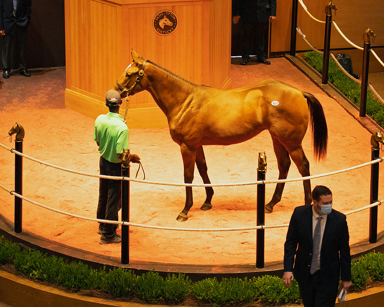 ON ITS WAY TO FINAL PRICE Hip 165 filly by Into Mischief out of Jazz Flute from Machmer Hall Sales<br /> Fasig-Tipton Selected Yearlings Showcase in Lexington, KY on September 9, 2020.