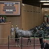 The Twirling Candy colt consigned as Hip 414 at the Keeneland September Sale