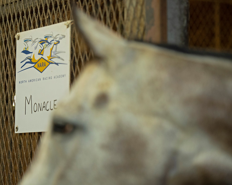 Caption:  Monacle with his sign. <br /> BCTC equine school and NARA in Lexington, Ky., and Thoroughbred Training Center, on July 6, 2020 BCTC in Lexington, KY.