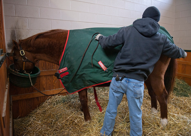Juan Padilla puts on his blanket while he eats. Distorted Humor at WinStar Farm on Dec. 23, 2019 WinStar Farm in Versailles, KY. Photo: Anne M. Eberhardt