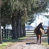 Pamela Deegan with Claire Soleil  in foal to Mendelssohn at Ashleigh Stud on<br /> Feb. 22, 2020 Ashleigh Stud in Paris, KY.