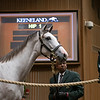 The Tapit fillyconsigned as Hip 1 in the ring at the Keeneland September Sale