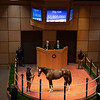 RNA Hip 648 filly by Curlin out of Hollywood Story from Hill 'n' Dale<br /> Fasig-Tipton Selected Yearlings Showcase in Lexington, KY on September 10, 2020.