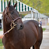 The War Front colt consigned as Hip 258 at Airdrie Stud's consignment to the Keeneland September Sale.