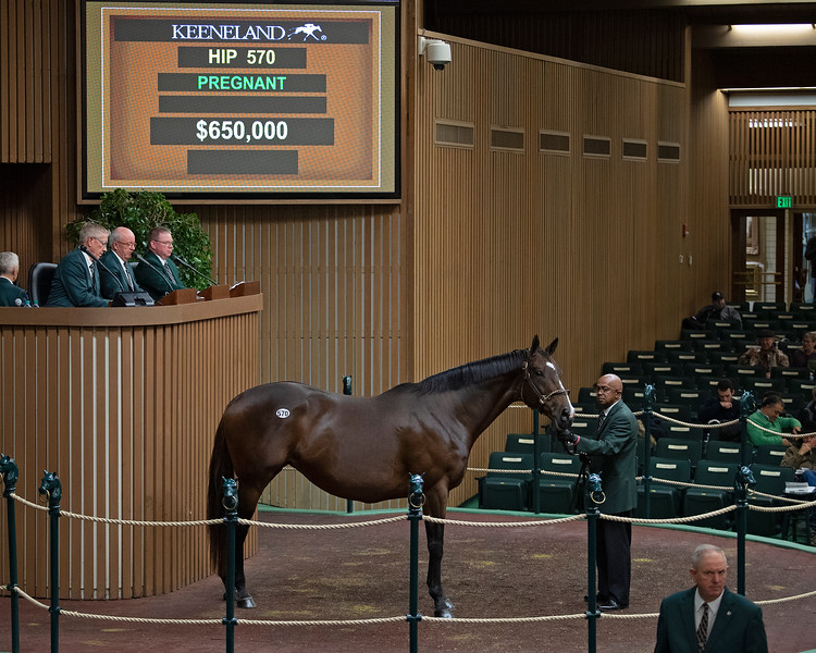 HIp 570 Conquest Eclipse<br /> at  Nov. 7, 2019 Keeneland in Lexington, KY.