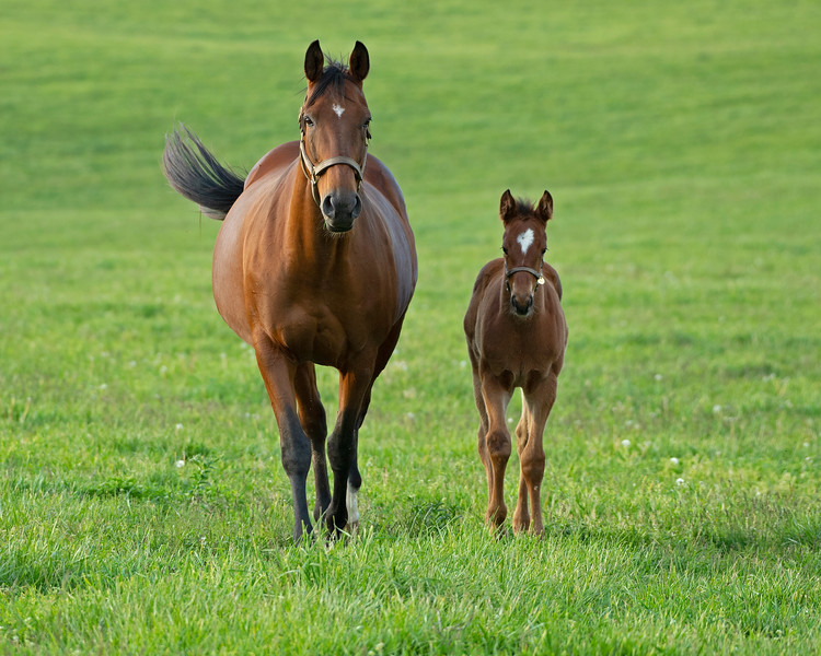 Caption: Well Spring and 2020 Practical Joke filly<br /> Mares, foals, yearlings, scenes at Ashview Farm near Versailles, Ky., on April 28, 2020 Ashview Farm in Versailles, KY.