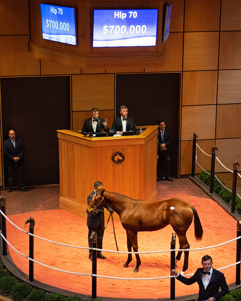 Hip 70 filly by Uncle Mo from Summer Applause and Lane's End<br /> at  Nov. 5, 2019 Fasig-Tipton in Lexington, KY.