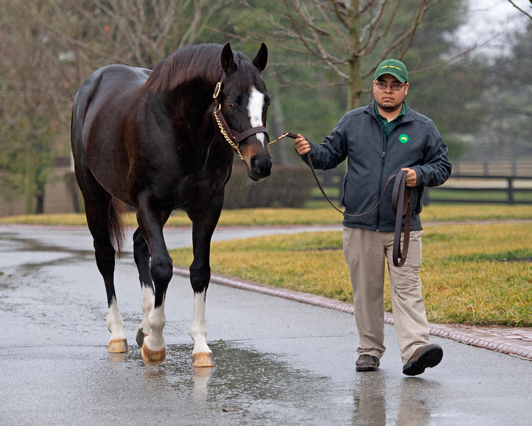 Honor Code at Lane's End Farm Press Pass 2020 on<br /> Feb. 4, 2020 Lane's End Farm in Versailles, KY.
