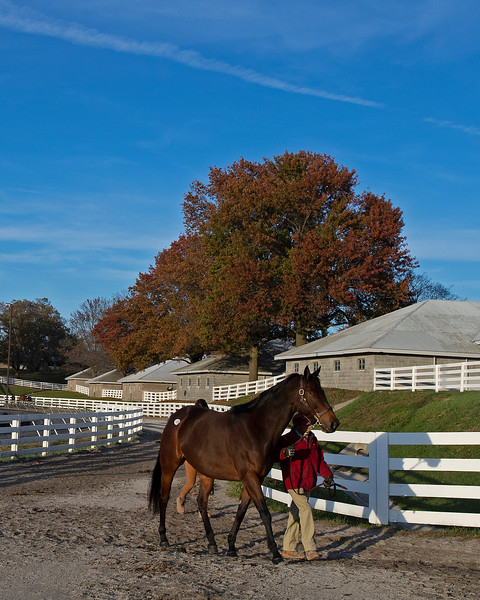 Scenes<br /> on  Nov. 9, 2019 Keeneland in Lexington, KY.