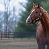 Code of Honor at Margaux Farm for some down time before returning to Shug McGaughey and his 4-year-old campaign on<br /> Jan. 23, 2020 Margaux Farm in Midway, KY.