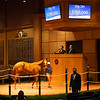 Hip 285 filly by Curlin out of Our Khrysty from Blue Heaven Farm<br /> Fasig-Tipton Selected Yearlings Showcase in Lexington, KY on September 9, 2020.