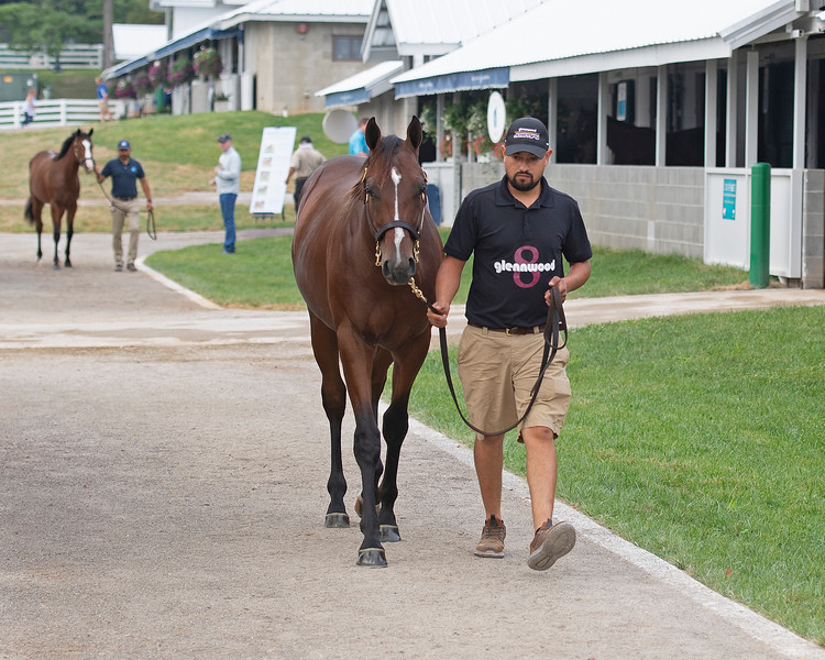 Hip 106 colt by Pioneerof the Nile out of Stage Magic consigned by Glennwood<br /> at the Keeneland September Sale.