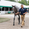 The Tapit colt consigned as Hip 172 at Timber Town's consignment to the Keeneland September Sale.