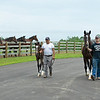 Caption: Hollywood Story lead by Connor Burton with 2020 Tapit filly, l eft, lead by Sergio Munoz<br /> Hollywood Story at Starwood Farm near Versailles, Ky., on June 30, 2020 Starwood Farm in Versailles, KY.