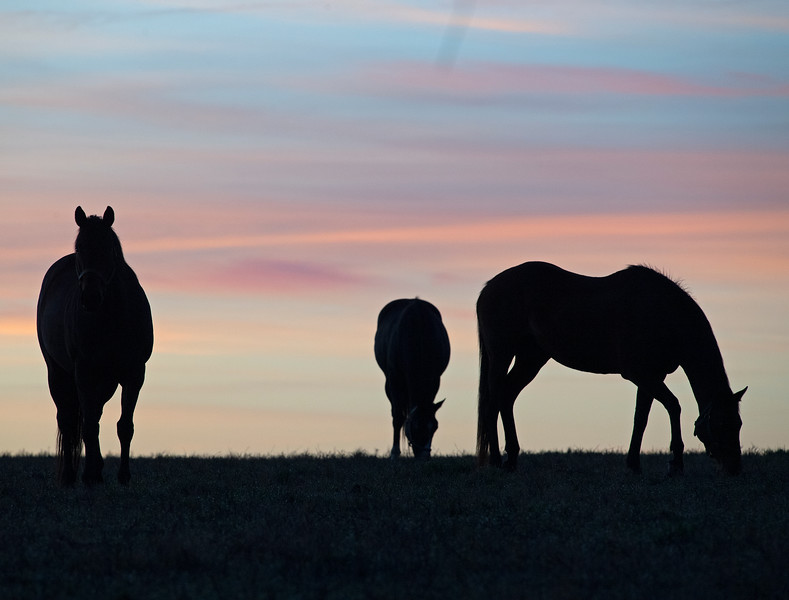Mares at sunrise on<br /> March 26, 2020  in Versailles, KY.