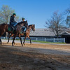 Caption: horses in training come off the main track<br /> Behind the Scenes at Keeneland during Covid19 virus and the people, horses, and essentials needed to take care of race horses on April 2, 2020 Keeneland in Lexington, KY.