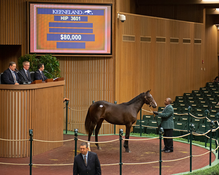 Hip 3601<br /> at the Keeneland September sale