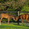 Caption: (L-R) colt by Blame out of Shesakitty colt by Malibu Moon out of St John's River<br /> Mares and foals on Heaven Trees Farm near Lexington, Ky., on May 22, 2020 Heaven Trees in Lexington, KY.