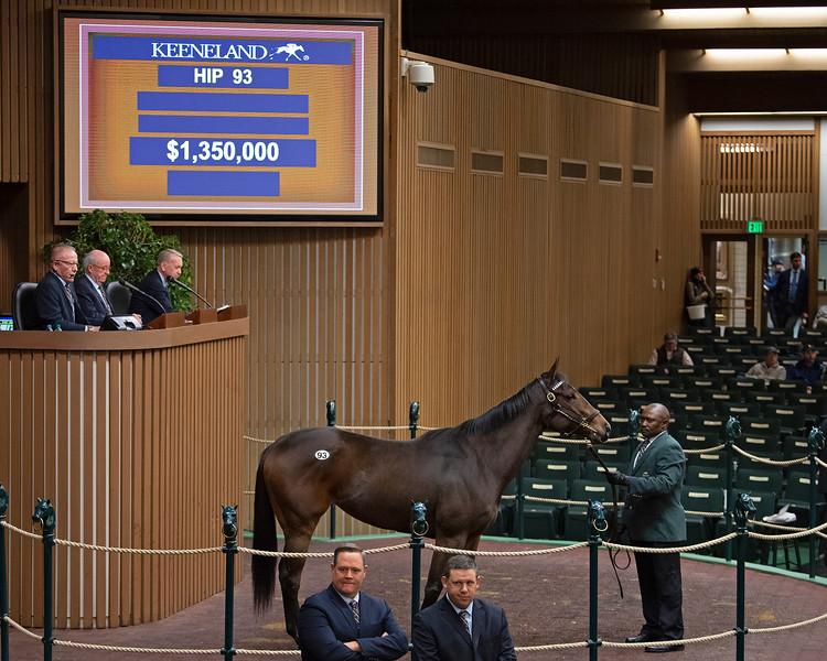 Hip 93 Spiced Perfection<br /> at  Nov. 6, 2019 Keeneland in Lexington, KY.
